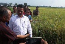 Menteri Pertanian (Mentan) RI Andi Amran Sulaiman