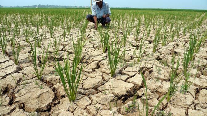 BMKG: Musim Kemarau Tahun 2018 Masih Kondusif bagi Pertanian