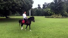 Jokowi tunggangi kuda sandalwood di istana Bogor