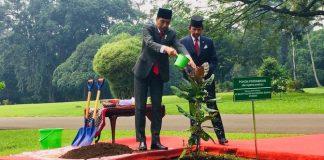 Jokowi Ajak Sultan Brunei Darussalam Tanam Pohon Perdamaian di Istana Bogor