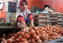 Ilustrasi pedagang telur.