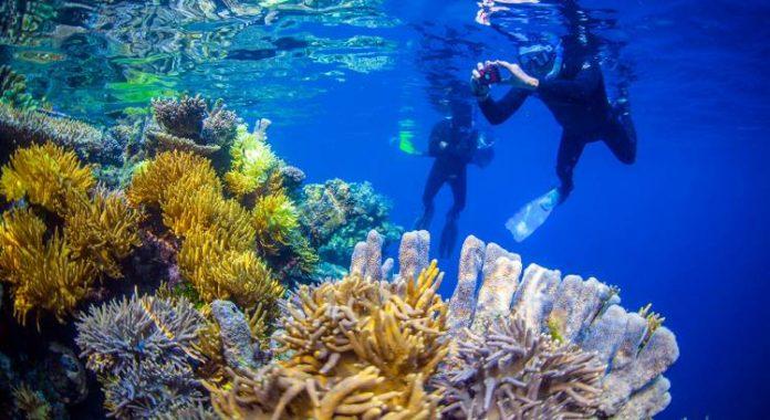 Destinasi Snorkeling Populer di Raja Ampat.