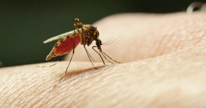 Mengenal Jenis Nyamuk dan Penyakit yang Dibawanya.