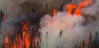 Daftar Kebakaran Hutan Paling Parah Dalam Sejarah.