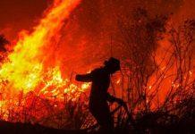 Masalah Karhutla di Indonesia, Sampai Kapan?