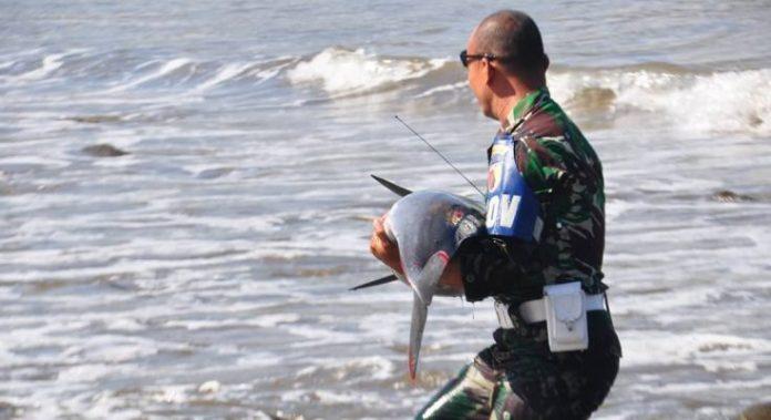 Serda Muhtar Selamatkan Lumba-Lumba yang Terdampar di Tulungagung.