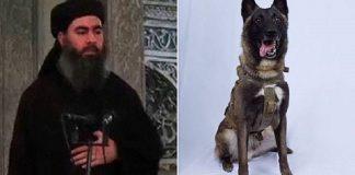 anjing yang dianggap pahlawan itu tetap menjadi rahasia nasional Amerika.