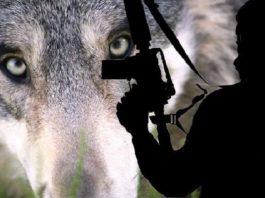 Ilustrasi Terorisme Lone Wolf.
