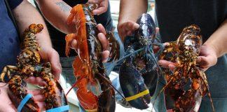 Wacana ekspor benih lobster oleh Menteri Kelautan dan Perikanan Edhy Prabowo tengah menjadi sorotan.