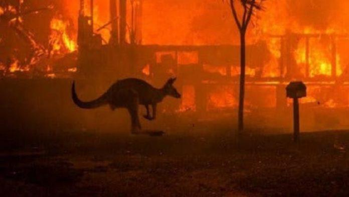 Kebakaran di Australia Telan Kerugian Mencapai Rp7 Triliun.