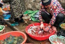 Dari Kelelawar Hingga Musang Ada di Pasar Wuhan China.