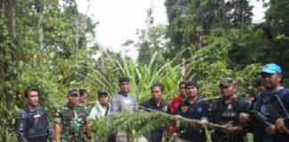 BNN dan Pasukan Raider Temukan 1 Ha Ladang Ganja di Perbatasan RI-PNG.