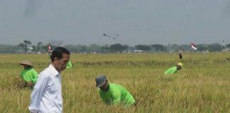 Jokowi Minta BUMN Buka Lahan Baru, Antisipasi Krisis Pangan.